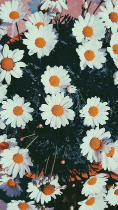 ideas wall paper flowers daisy for 2019 Tumblr Wallpaper, Wallpaper Tumblrs, Daisy Wallpaper, Phone Wallpapers Tumblr, Flower Iphone Wallpaper, Cute Backgrounds, Phone Backgrounds, Wallpaper Backgrounds, Tumblr Photography