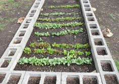 Raised garden bed with concrete blocks.  You can plant in the holes or use them for a stable way to adhere a tarp for a detachable green house.