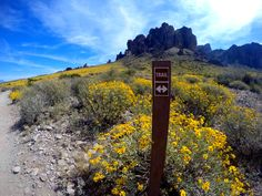 Lost Dutchman State Park| AZ Hike the Arizona Superstition Mountains, Treasure Loop Trail, Native Plant Trail, Prospector's View Trail, Jacob's Crosscut Trail, Siphon Draw Trail, Discovery Trail, Flatiron Trail. Best places to hike in Arizona in the spring time. Wander through the Wildflower Forest along Apache Trail. Arizona Hiking, Bucket list hiking. Phoenix hiking trail. Get lost for a while. Traveling to Arizona, things to do in Arizona. Arizona Adventure. Hiking Blog Natalie Nicosia