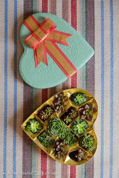 I heart succulents. Upcycling a Valentine's Day heart-shaped candy box into a succulent planter by Farmhouse38.com