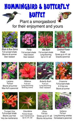 Hummingbirds & Butterflies - what to plant to attract them to your garden.