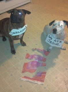 All Dogs go to Heaven?Mya (the brindle) and Opal (the ticked) were not excited about our poster of Jesus whose eyes…View Postshared via WordPress.com