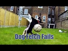 Dog Fetch Fails. These dogs are hilariously awful at catching and fetching. Links to the full videos can be found below. Watch more funny videos: http://tastefullyoffensive.c...