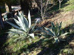 Extremadura-Cactus