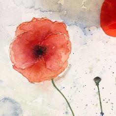 Copyright by Adriana Galindo - Papoula, poppy, pavot, Provence, printemps, spring, primavera, flower, flores, fleur, flor vermelha, red , aquarela , watercolor, aquarelle, nature, natureza, france, frança, ilustracao, illustration, pintura, painting, illustration, decoracao, decor, plein air, observacao, adriangagalindo, drigalindo, copyright by Adriana Galindo