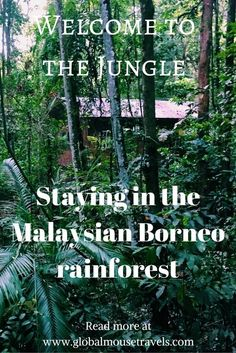A wonderful stay in the Malaysian Borneo rainforest with children. This is a fantastic place to really feel like you're part of the jungle and kids will love it. There's even a natural swimming pool in this resort. Borneo Travel, Malaysia Travel, Asia Travel, Malaysia Trip, George Town, Ipoh, Kuala Lumpur, Travel With Kids, Family Travel