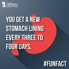 How often do you get a new stomach lining?