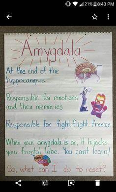 Amygdala anchor chart from Dr. Lori Desautels