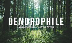 dendrophile - a person who loves trees
