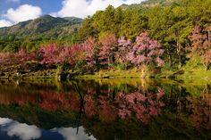 My Memory - Location : Doi Inthanon National Park Chiang Mai, Thailand