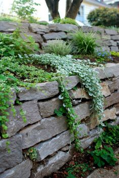 dry stack stone wall with plants over it garden landscaping retaining walls Apartment Therapy Garden Retaining Wall, Landscaping Retaining Walls, Hillside Landscaping, Sloped Garden, Landscaping With Rocks, Front Yard Landscaping, Landscaping Ideas, Stone Retaining Wall, Garden Beds