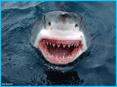 Il se fait attaquer par un requin et survit #JasonDimitri