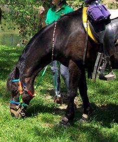 Choosing clothing and tack for distance riding