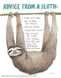 http://www.drawnfrommybrain.com/wp-content/uploads/2014/01/Advice-from-a-Sloth.png