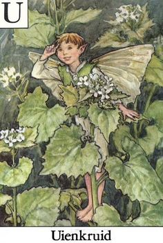 The Uienkruid Flower Fairy - Cicely Mary Barker