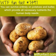 Potatoes provide you with all nutrients your body needs – WTF… (WTF Facts : funny & weird facts) Potatoes provide you with all nutrients your body needs – WTF… Funny Weird Facts, Wtf Fun Facts, Crazy Facts, Random Facts, Benefits Of Potatoes, Fromage Vegan, Potato Juice, Potato Soup, Potato Diet