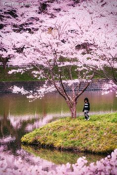 Little Girl surrounded by Sakura by WindyLife on deviantART.....Niwaki Dam, Ureshino, Saga, Japan.