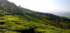 Wayanad Tourism Wayanad Travel Guide Tour Information - Wayanad Kerala India