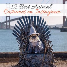 The 12 Best Animal Costumes on Instagram | thegoodstuff