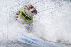 """Surf Dog Competition"" San Diego by Nathan Rupert. http://www.pinterest.com/petmoods/surf-dog-competition"