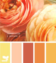 Ranunculus petals...unusual color scheme for a spring garden...I can think of lots of lilies and tulips within this color range. Will research other possibilities and ways to incorporate this palette. Fun.