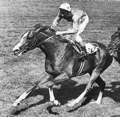 The Minstrel storms home in the 1977 Epsom Derby Sired by Northern Dancer, The Minstrel was ¾ brother to Triple Crown winner Nijinsky (Nijinsky's dam, Flaming Page, was also the dam of Fleur, who was.