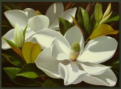 Magnolias...In your hair, on a table, in a vase, dried, or framed... Sooooo paintable!