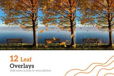 Autumn Starter Pack-Overlays Presets by GraphicValley on Lens Blur, Kinds Of Colors, Motion Blur, Autumn Photography, Summer Photos, All The Way Down, Photo Colour, Photoshop Actions, Lightroom Presets