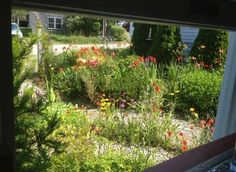 xeriscaping with wild flowers