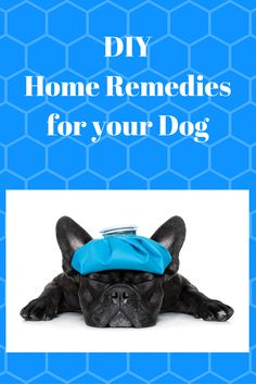 Looking for inexpensive ways to take care of your dog's health?  Read here for some great DIY ideas! www.lucyspetcare.info