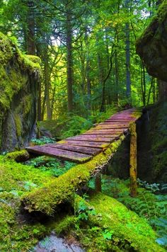 Forest bridge in BC, Canada