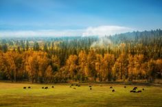 Autumn morning in Hamilton, Montana