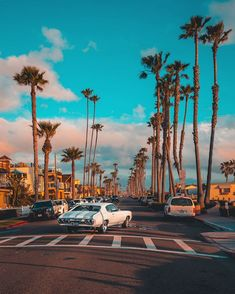 Palm trees lining a city street, Old Town San Diego, California, USA. The Best Videos and Images of San Diego, California California Palm Trees, California Travel, California Hair, Venice Beach California, California Winter, California California, Vintage California, Outdoor Fotografie, Magic Places