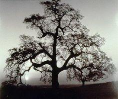 Ansel Adams | Photography
