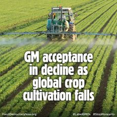 The number of countries cultivating genetically modified crops has fallen for the first time, as acceptance of the technology declines, say Friends of the Earth U.S.. http://www.foodnavigator.com/Science-Nutrition/GM-acceptance-in-decline-as-global-crop-cultivation-falls #GMOs #GEfood #food