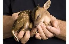 Alright, deer are horrible creatures but, d'awwwwwwww
