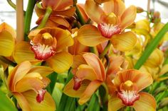 Orchid Trail In Santa Barbara In The Garden Pinterest