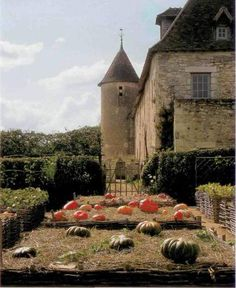 Love everything about this picture...great pumpkins, cool wattle and majestic setting..