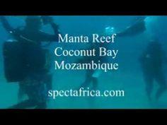 manta reef Spectafrica Tourism Tourism, Youtube, Turismo, Youtubers, Travel, Youtube Movies, Traveling