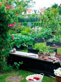 scattered raised beds