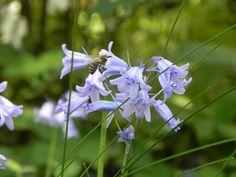 heutzutage kann man sich glücklich schätzen, im Garten noch Bienen begrüßen zu dürfen Plants, Bees, Gardening, Plant, Planting, Planets