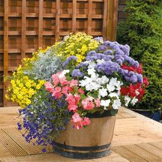 great container garden ideas | garden | pinterest | gardens ... - Patio Flower Ideas