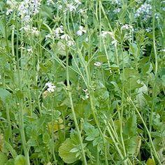 La produzione dell'orto è insoddisfacente senza motivi apparenti? Forse è colpa dei nematodi - Coltivare l'orto