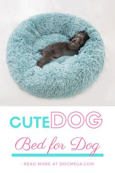 Shop our cute dog beds by size from toy to extra large. Molly Mutt has stylish dog beds that are machine washable and modern to complement your style. Cute Dog Beds, Cute Small Dogs, Dog Beds For Small Dogs, Cute Dogs, Dog Breeds Little, Big Dog Breeds, Unique Dog Breeds, Dog Breeds Chart, Loyal Dog Breeds