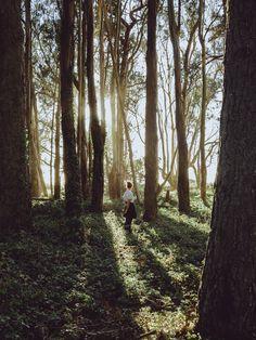 Nirav Patel   Fine Art Wedding Photographer Photography - Light - Forest