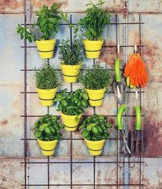 Wandgitter DIY ideas for the garden lattice-wall-yellow-tontoepfe-herbs # vertical vegetable garden Verticle Garden, Herb Garden Planter, Eva Garden, Herbs Garden, Balcony Plants, Indoor Plants, Balcony Gardening, Culture D'herbes, Lattice Wall