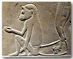 Egypt used trained monkeys to pick ripe figs. Ancient Egypt Animals, Ancient Egypt Art, Old Egypt, Statues, Monuments, Indigenous Art, Egyptian Art, Love Art, Art Reference