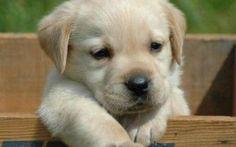 """Il cane: Il migliore amico dell'uomo Quando arriviamo a casa dopo una lunga giornata è lui il primo ad accoglierci e farci sentire amati, se ci sentiamo tristi lui se ne accorge e ci viene incontro donandoci amore, se a volte siamo così #""""cane""""""""uomo"""""""