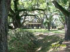 Butler Greenwood Plantation  | Butler Greenwood Plantation - Picture of Butler Greenwood Plantation ...