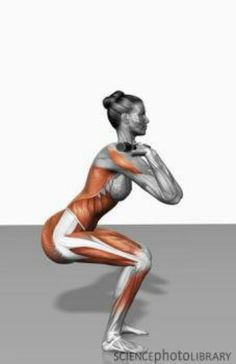 Muscles activated during a front squat.